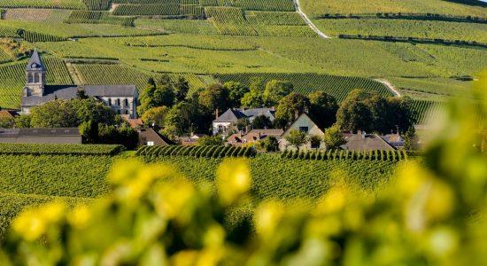 Viagens e muitas histórias região de Champagne, França
