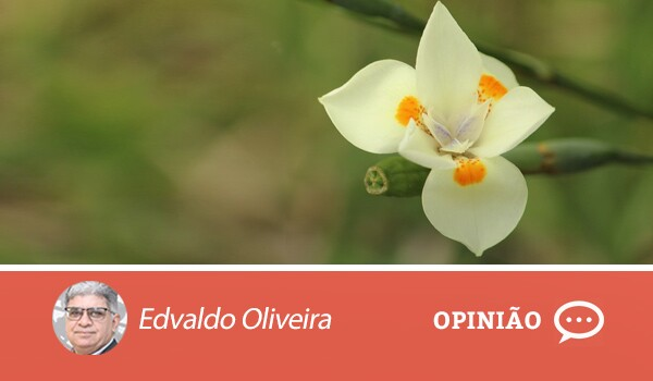 Opiniao-edvaldo-1