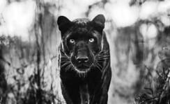 Animais selvagens encaram a câmera