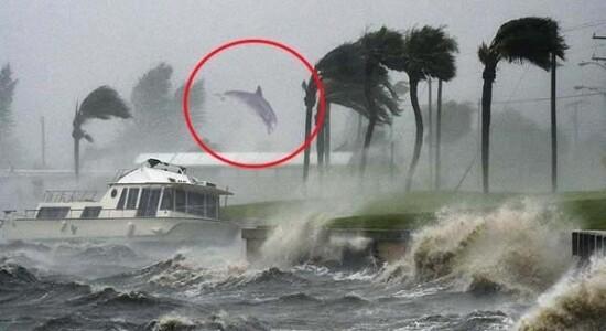 Golfinho não foi levado pelo vento durante furacão Dorian